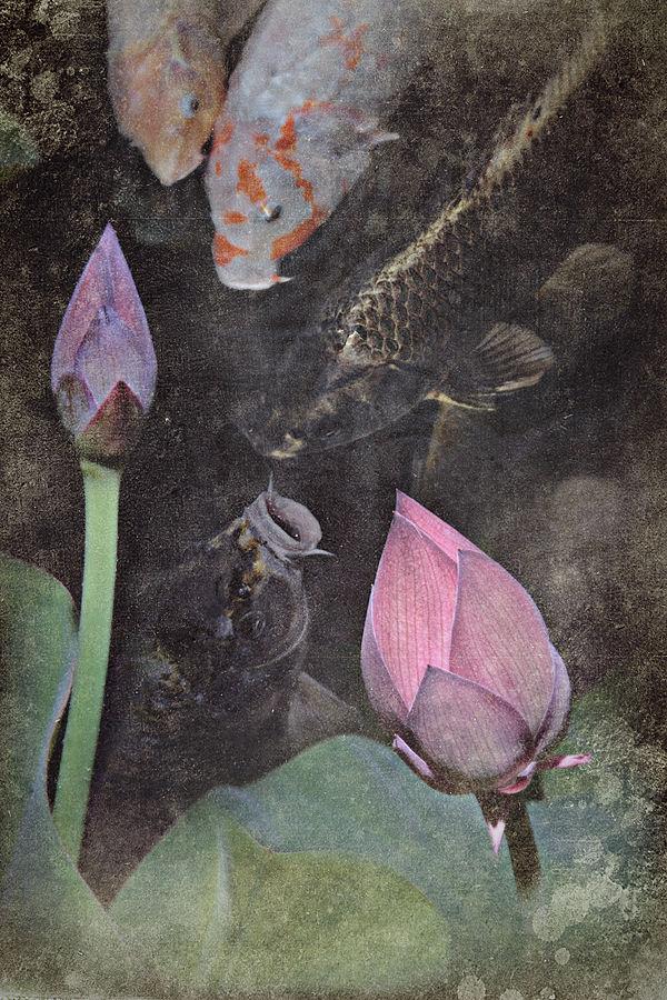 Lotus and carp