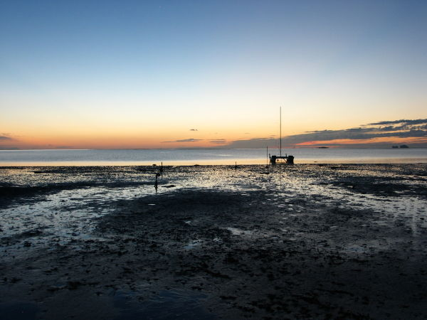 mud flats exposed by an extra low tide at sunrise