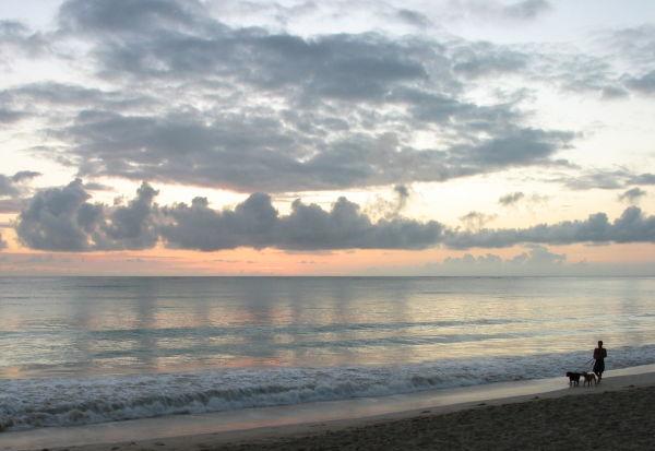 Beach Dogs II