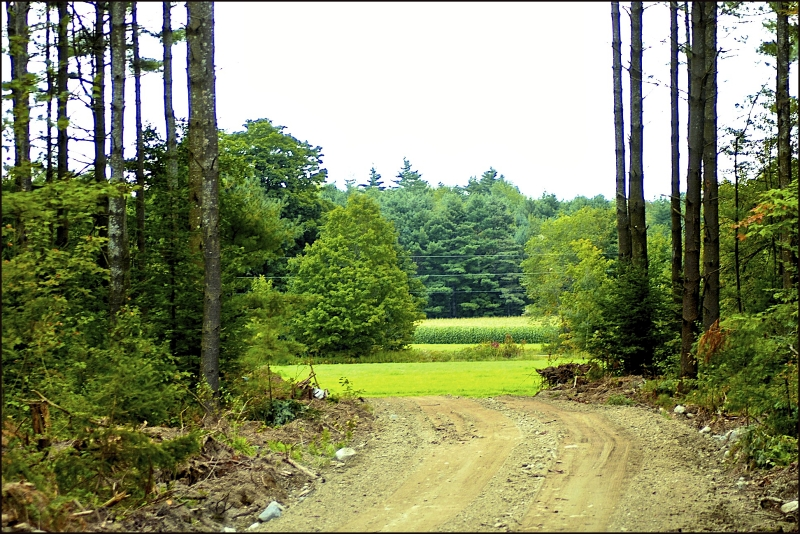 Coming out from the woods Maine