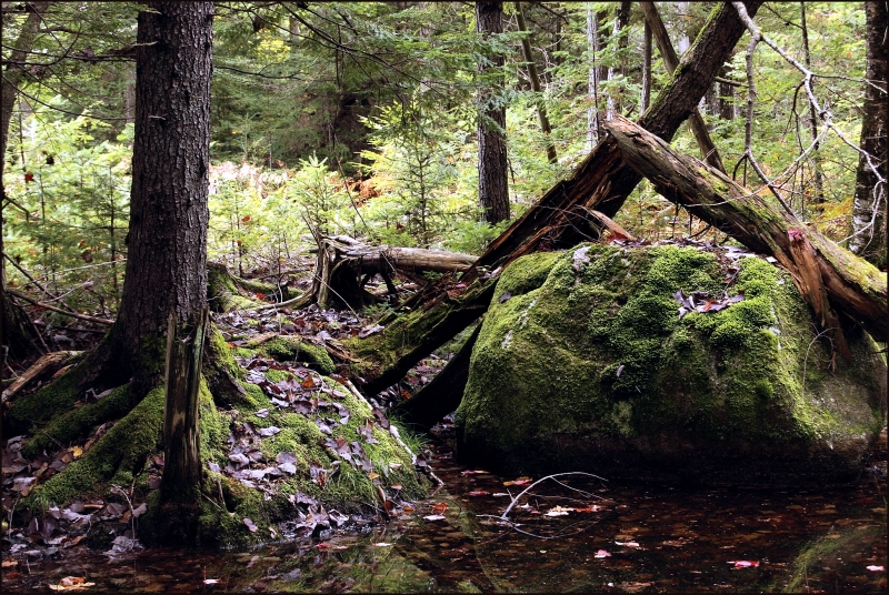 Mossy Woodland, Madison, Maine