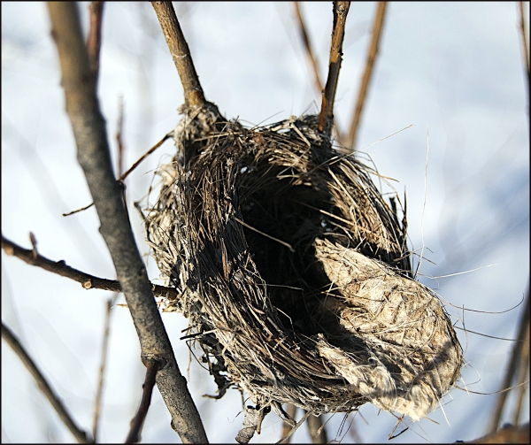 Cold Nest