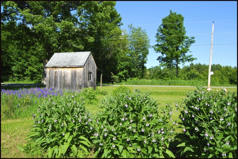 farmstand and yard in full bloom