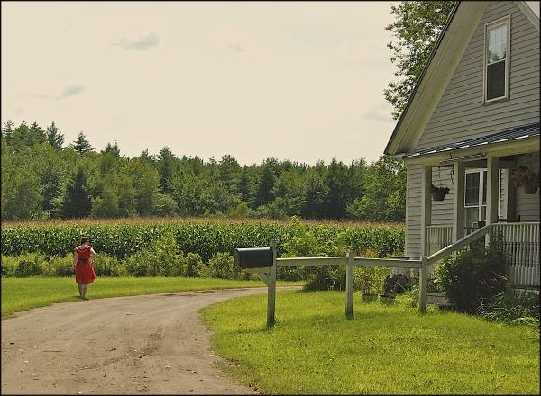 Taking A Stroll On A Farm Road In Maine