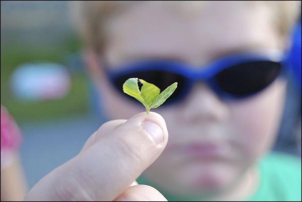 Boy With Three Leaf Clover