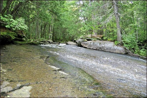 Carry Pond Stream - The Slide