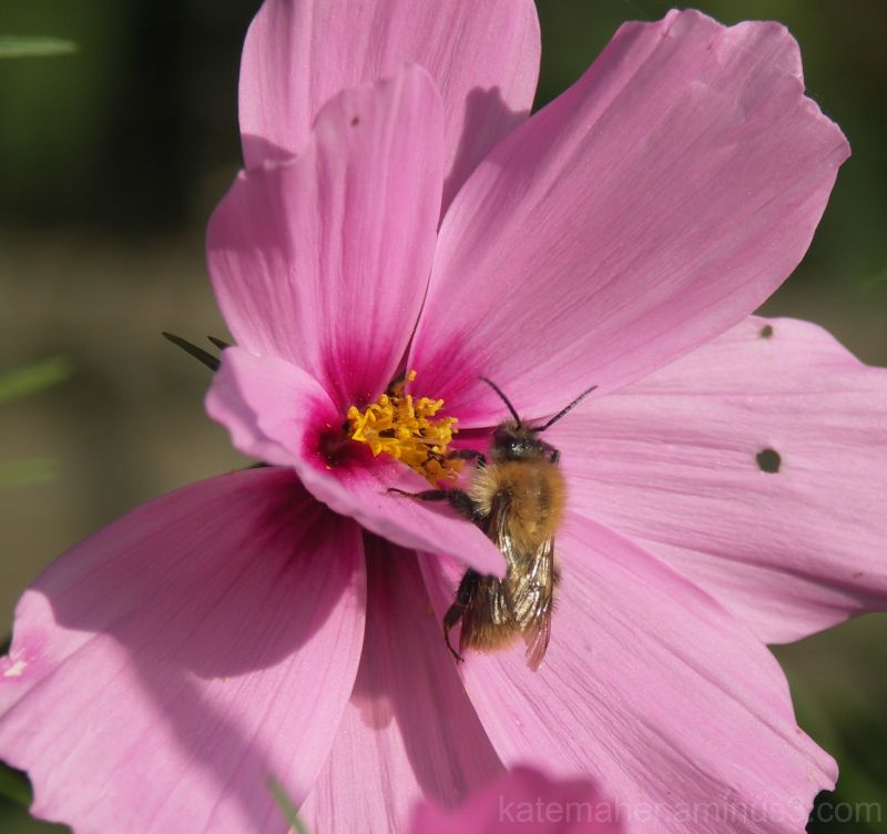 a busy busy bee