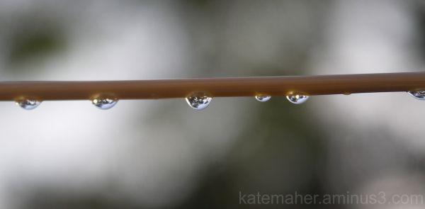hanging rain drops