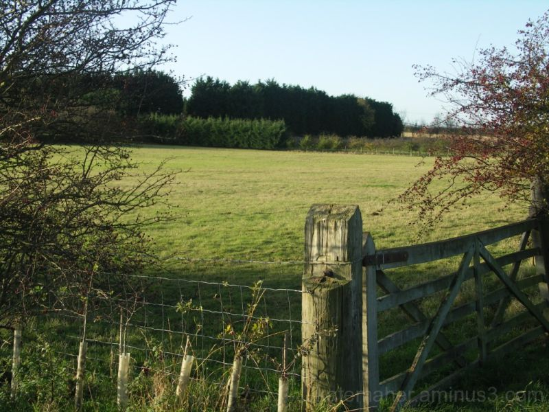 FIELDS AND GATE