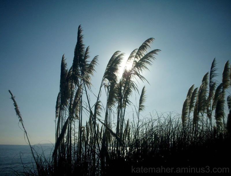 sun.sea,pampass grass,winter