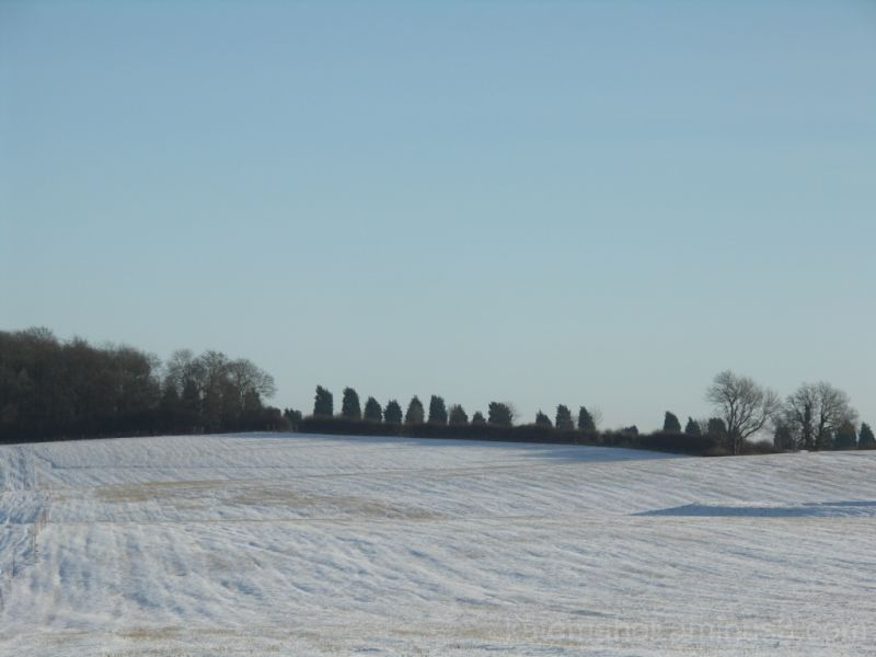 snowy fields and blue sky