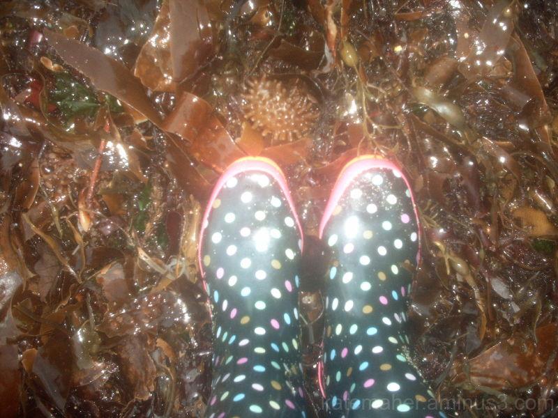 deep in seaweed
