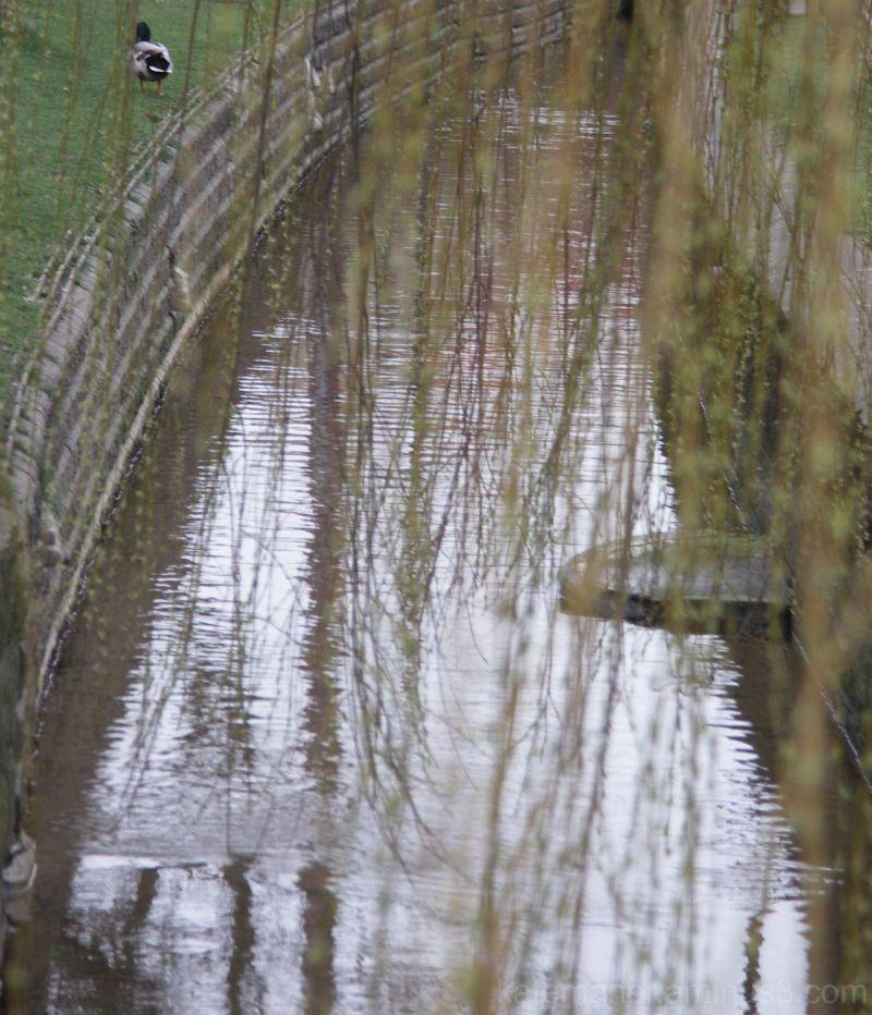 stream through the willow