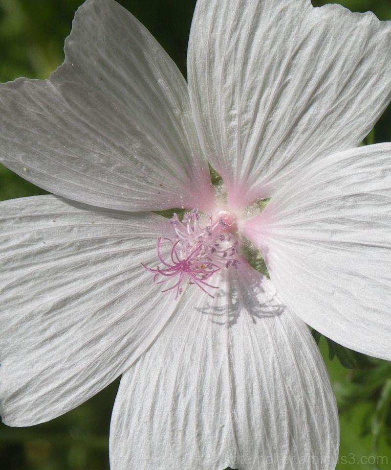 Easter Day Flower