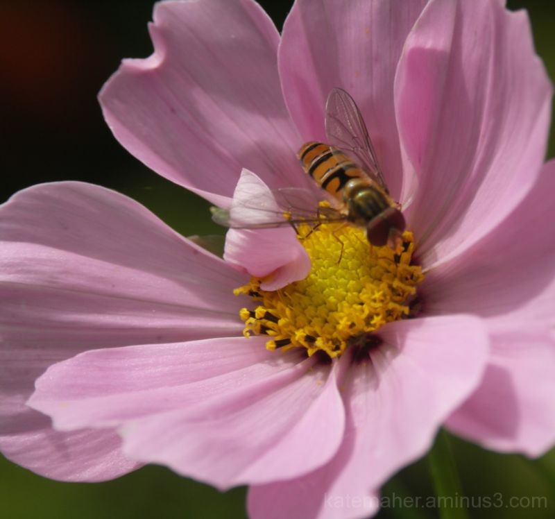 Wasp on cosmos!