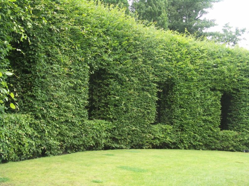 green hedge!