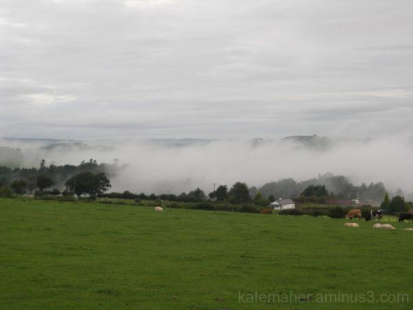 Misty Morning! 3