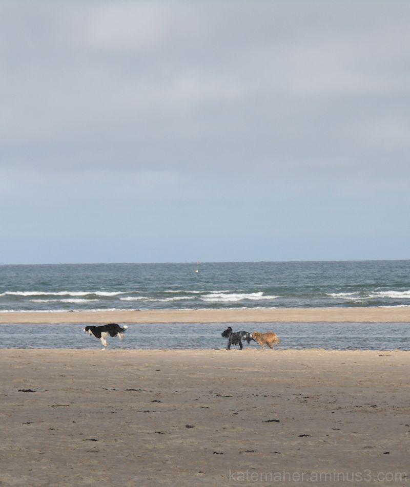 beach play!