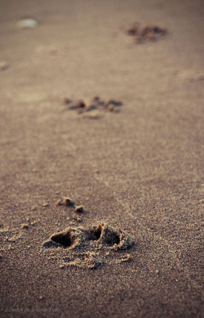Paw Prints in the Sand...