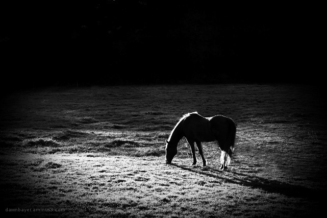 Sunset Grazing 2