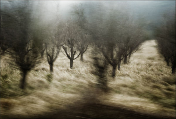 fast trees