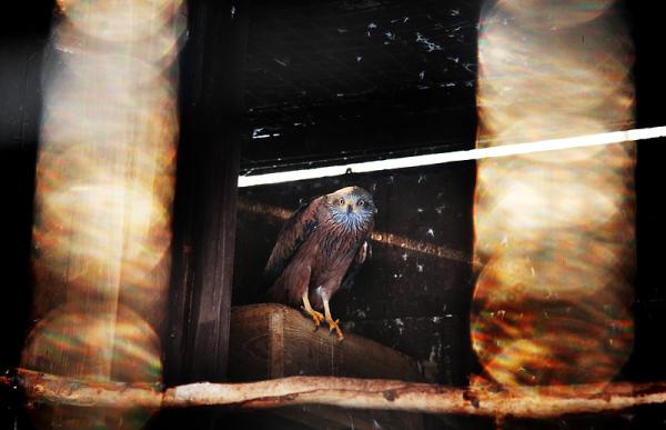 damaged bird