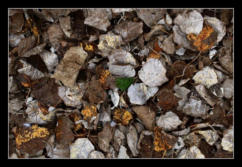 leaf hope