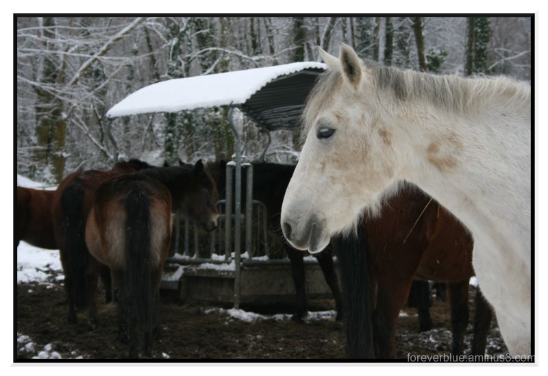 WILD HORSES (COULD