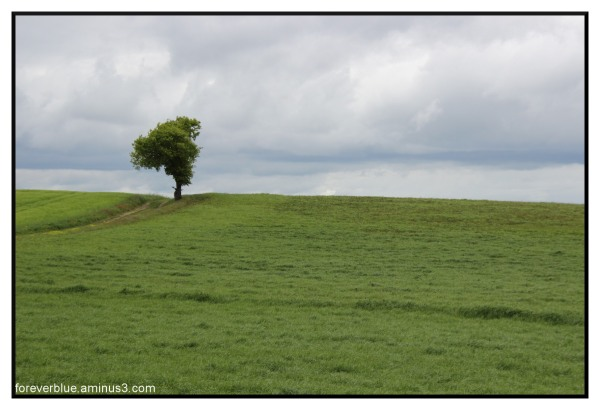 MOTHER NATURE 1 : QUAND LIMOUSIN SE FAIT IRLANDE..