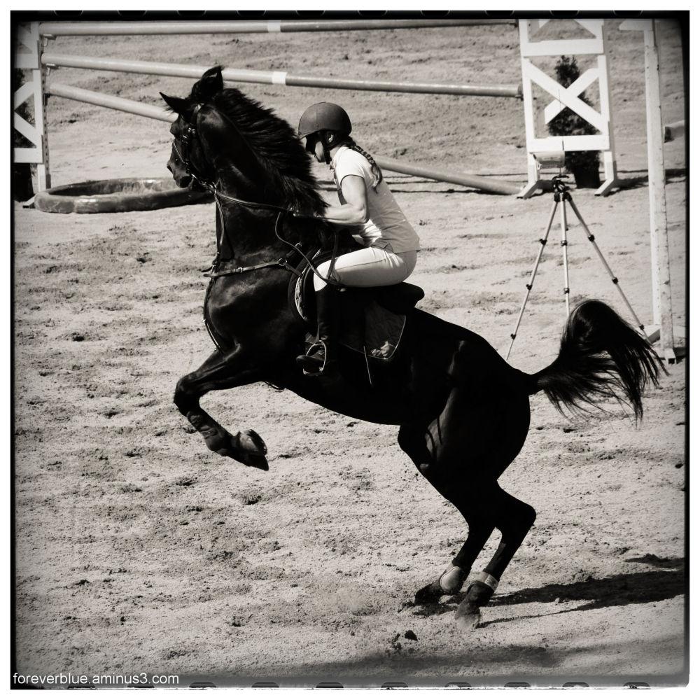 ...REBEL HORSE...