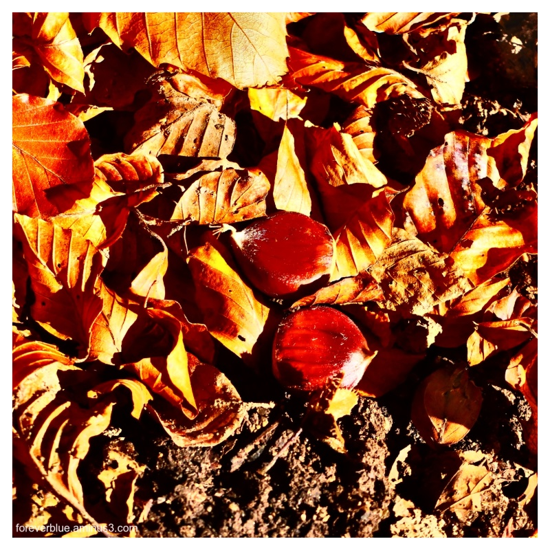 ... THE FALL ....