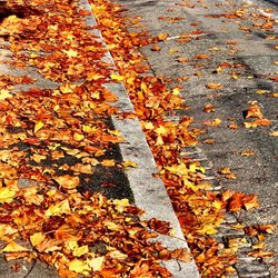 ... AUTUMN IN THE CITY ...