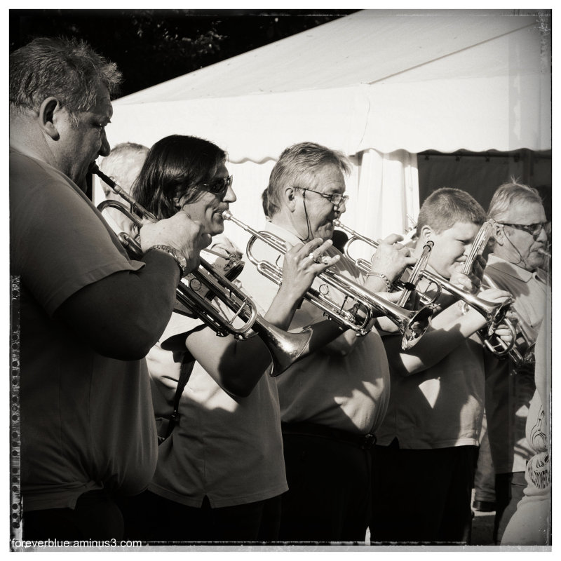 ... HORNS SECTION IN THE SUN ...