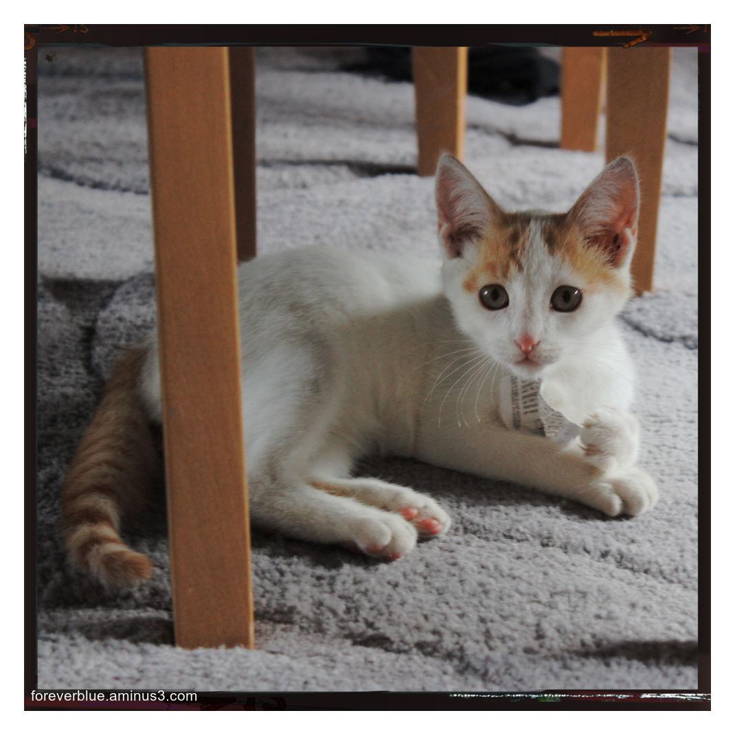 ... THE CAT ...