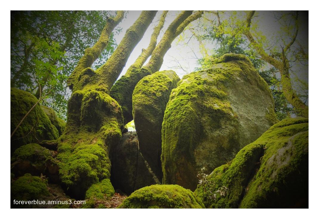 ... FOREST LEGENDS ... (2)
