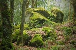 ... FOREST LEGENDS ... (3)