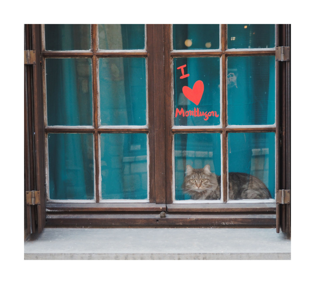 ...(THERE'S A ) CAT IN THE WINDOW ...