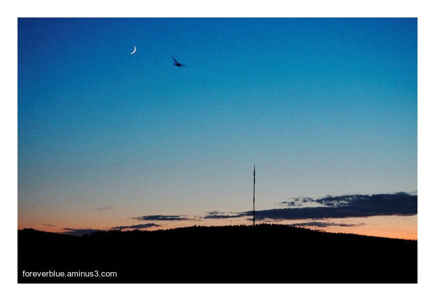 ... NIGHT BIRD ...