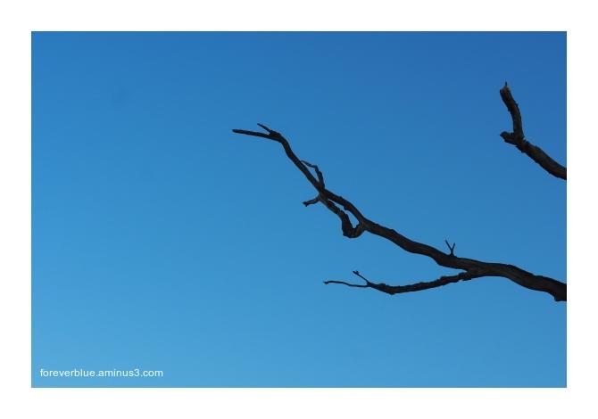 ... BLACK ON BLUE ...