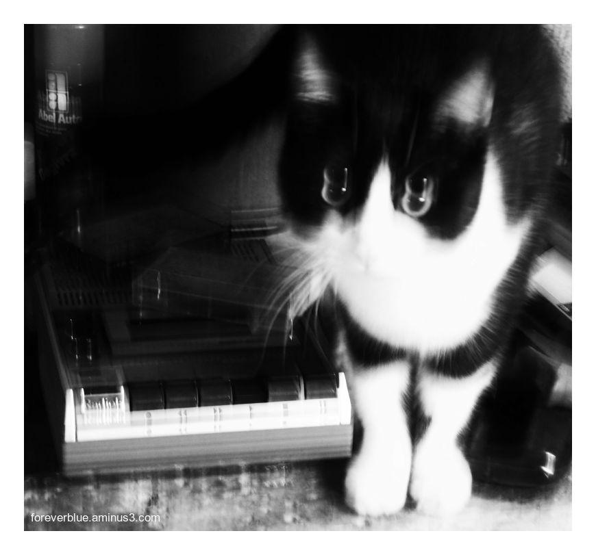 ...ZOMBIE CAT ...