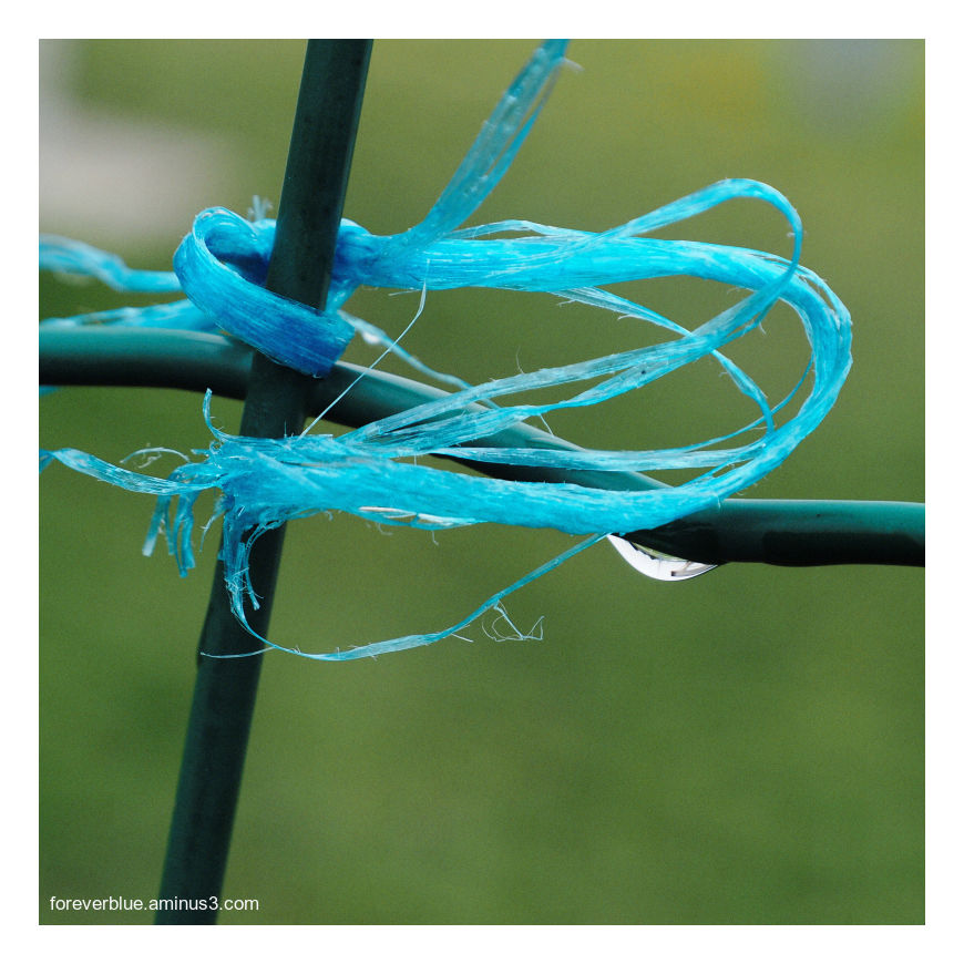 ...  THE TEARING WIRE ...