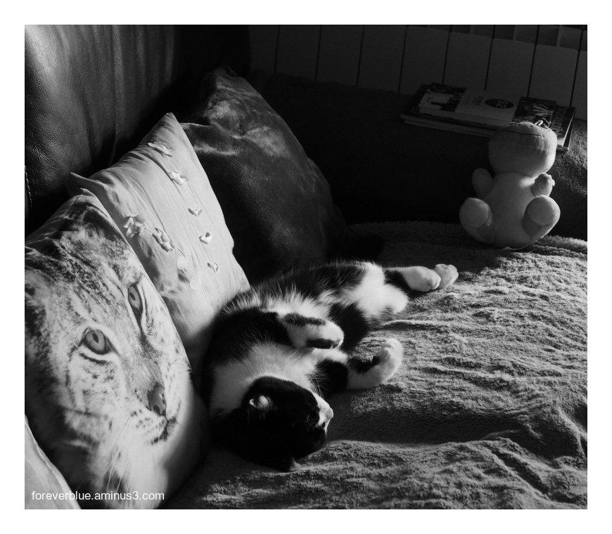 ... ANIMALS ...
