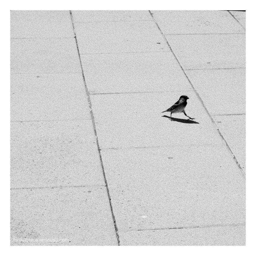 ... LITTLE BIRD ..
