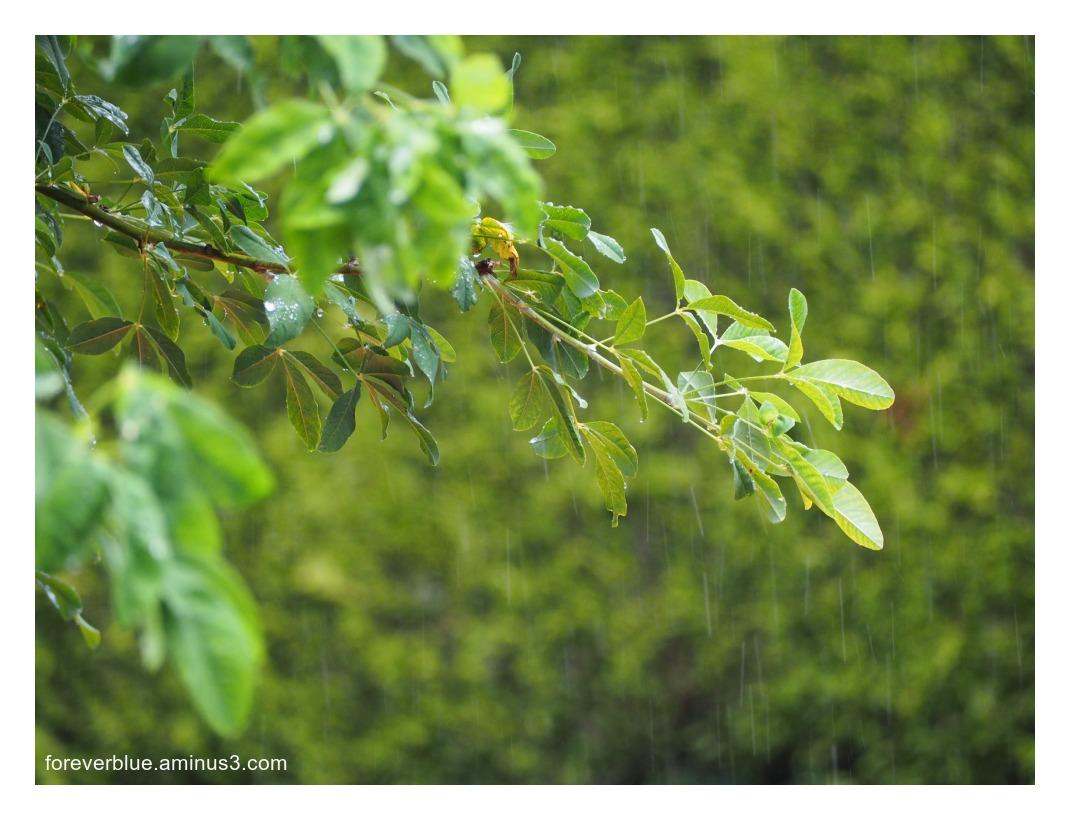... NEVER ENDING RAIN.....