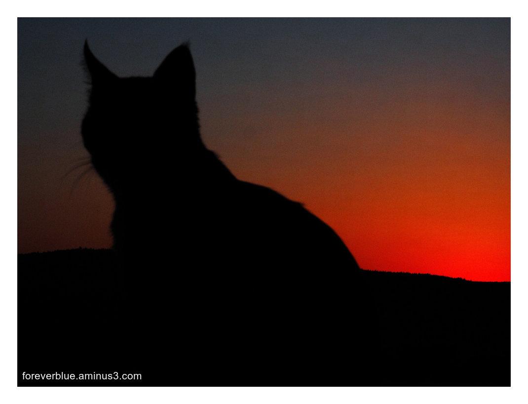 ... RICKY AT SUNSET ...