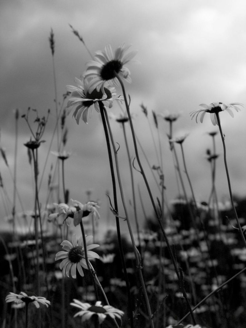 Wilting into Time