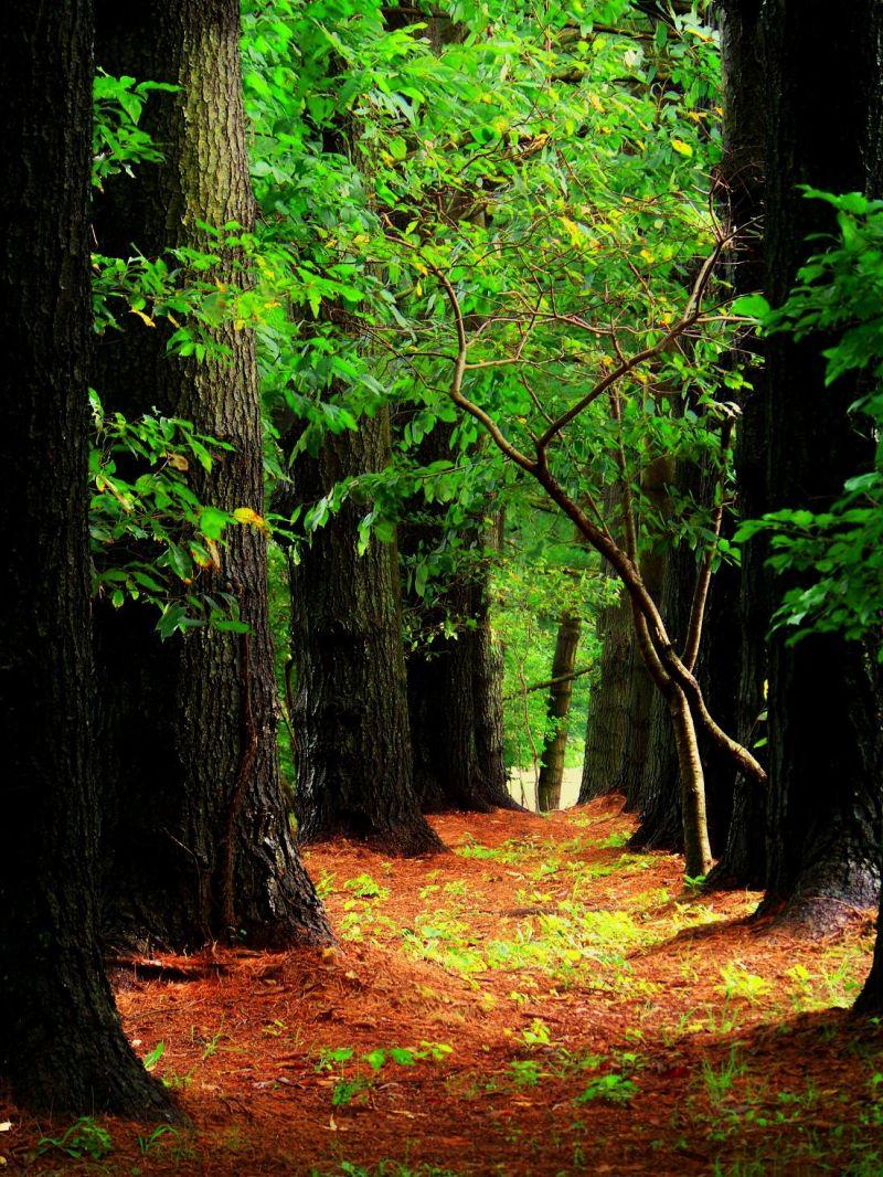A Quiet Stroll