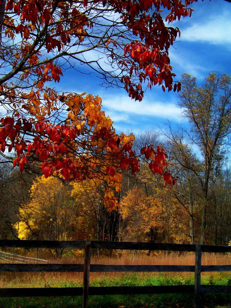 Autumn's Easel