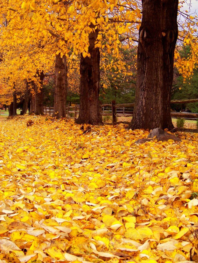 Golden Blanket