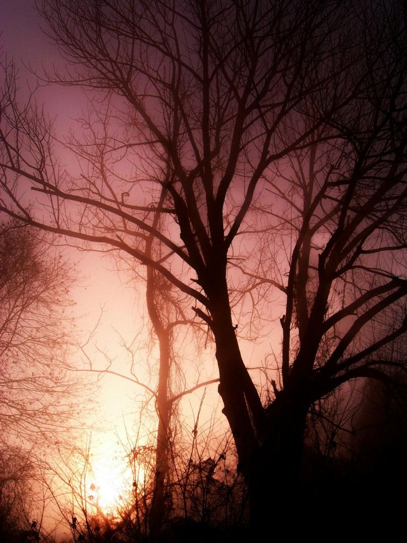Enchanted Fog Sunrise